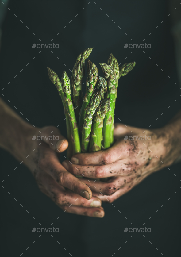 Bunch of fresh green asparagus in dirty man' s hands - Stock Photo - Images