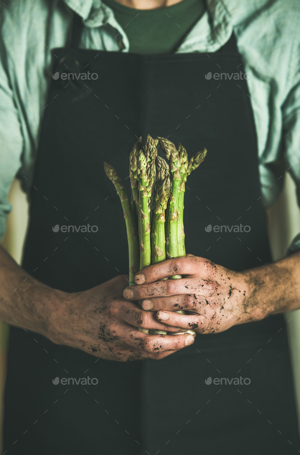 Bunch of fresh uncooked seasonal asparagus in dirty farmer's hands - Stock Photo - Images