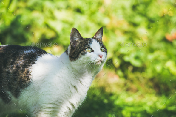 White and grey cat in garden, looking aside - Stock Photo - Images