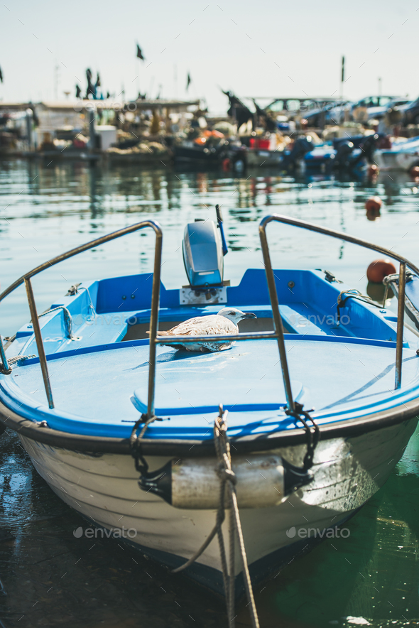 Seagull having rest on blue boat in Piran marina, Slovenia - Stock Photo - Images