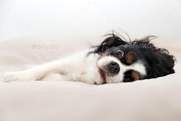 Dog portrait - Stock Photo - Images