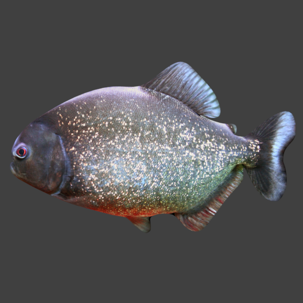 Piranha - 3DOcean Item for Sale
