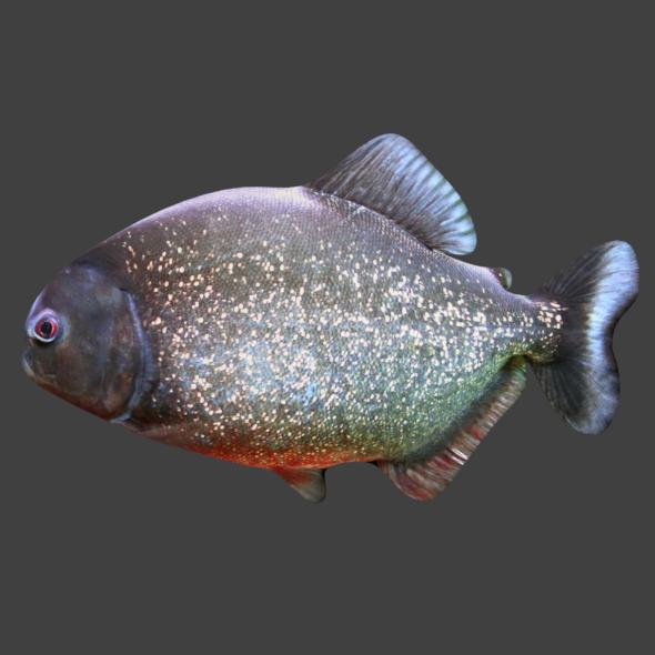 3DOcean Piranha 20801423