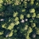 Aerial Drone Shot Over the North European Forest - VideoHive Item for Sale