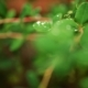 Green Leaves in the Garden. Saturated Green. Water Drips on Leaves - VideoHive Item for Sale