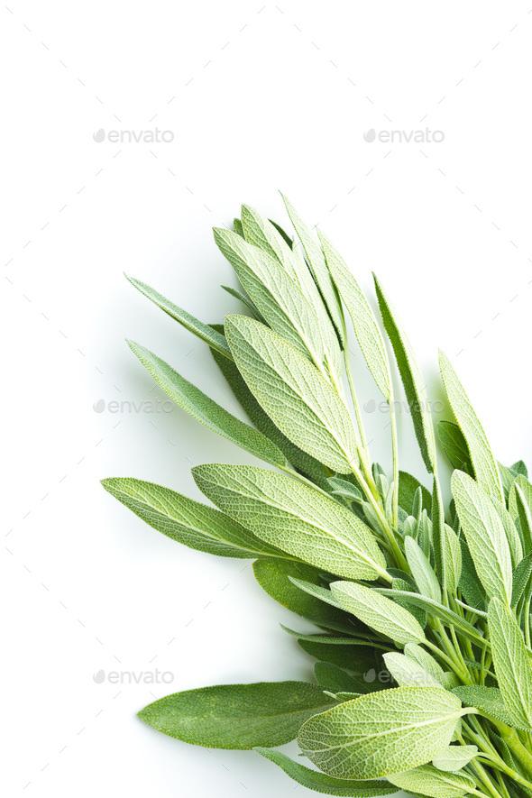 Salvia officinalis. Sage branch. - Stock Photo - Images