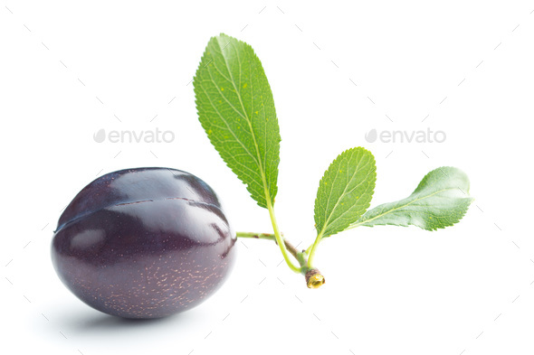 Fresh plum with branch with leaf. - Stock Photo - Images