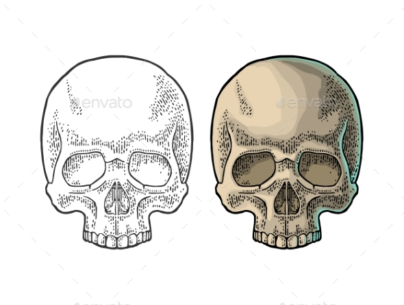 Human Skull - Miscellaneous Vectors