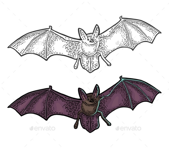 Bat Flying with Scary Face - Animals Characters