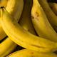 Raw Organic Yellow Plantain Bananas - PhotoDune Item for Sale