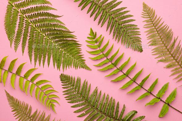 Fern Leaf - Stock Photo - Images