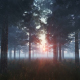 Sunset in Pine Forest - VideoHive Item for Sale
