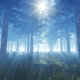Pine Forest and Sun - VideoHive Item for Sale