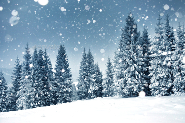 Christmas background with snowy fir trees and heavy snowfall - Stock Photo - Images
