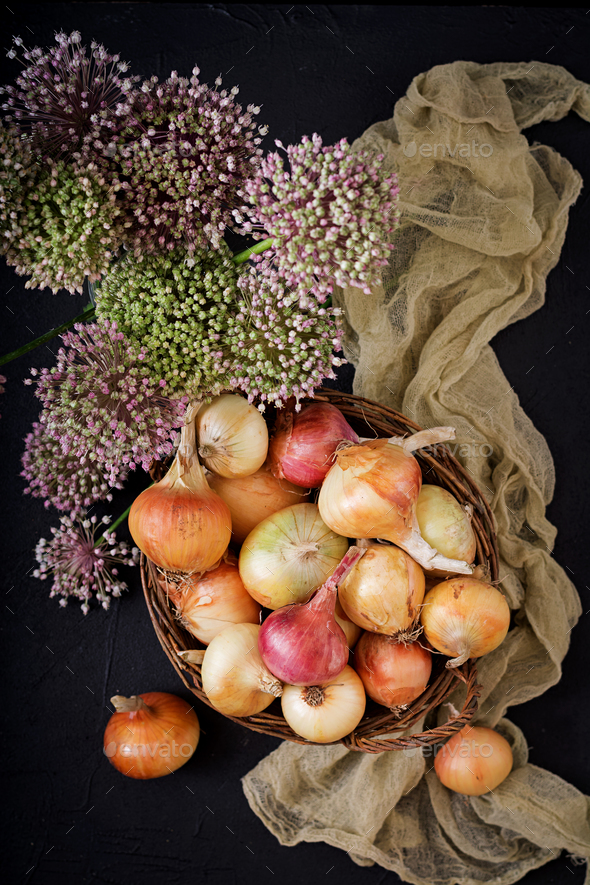 Fresh  young onion bulbs and onion blossoms. Flat lay. Top view - Stock Photo - Images