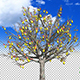 Pears on a tree - VideoHive Item for Sale