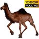 Camel 8