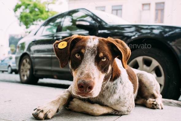 Medium Size Mixed Breed Homeless Dog Sit Outdoor - Stock Photo - Images