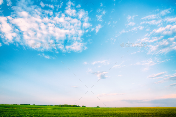 Field Landscape Under Scenic Spring Blue Dramatic Sky With White - Stock Photo - Images