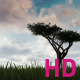 Grass Tree Sky - VideoHive Item for Sale