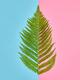 Fern Tropical Leaf. Floral Summer Fashion. Minimal - PhotoDune Item for Sale