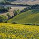 Summer landscape in Marches near Corinaldo - PhotoDune Item for Sale
