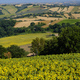Summer landscape in Marches near Fossombrone - PhotoDune Item for Sale