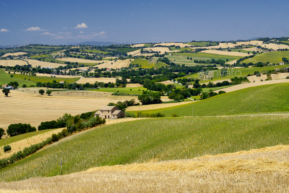 Summer landscape in Marches (Italy) near Ostra - Stock Photo - Images