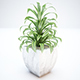 Plant and Vase for Exterior - 3DOcean Item for Sale