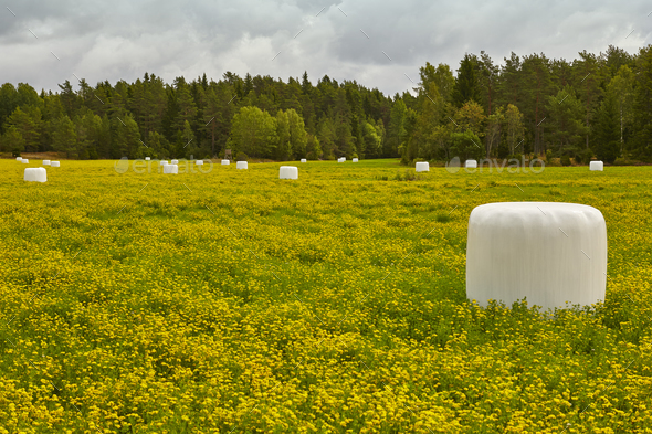 Packed silage on the countryside. Green and yellow landscape. Horizontal - Stock Photo - Images
