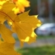 Autumn in the City - VideoHive Item for Sale