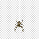Spider - VideoHive Item for Sale