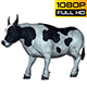 Bull 9