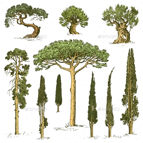 Set of Engraved Hand Drawn Trees - Flowers & Plants Nature