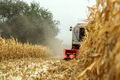 Corn maize harvest, combine harvester in field - PhotoDune Item for Sale
