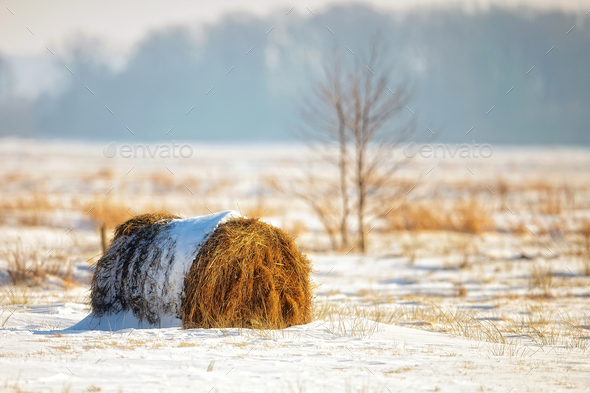 Bale of hay in a field - Stock Photo - Images
