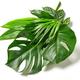 various tropical leaves  - PhotoDune Item for Sale