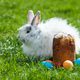 Easter bunny behind Easter cake and painted eggs - PhotoDune Item for Sale