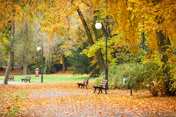 View on trail or footpath with orange and yellow leaves in autumnal park - Stock Photo - Images