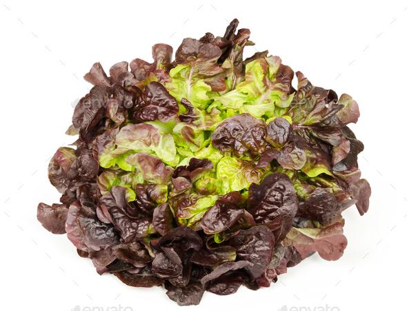 Red oak leaf lettuce front view over white - Stock Photo - Images