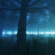 Foggy Forest - VideoHive Item for Sale