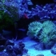 Aquarium, Fish Tank, Coral Reef, Animals, Nature