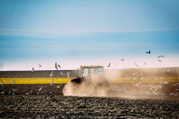 Flock Of Birds Of Seagull Flies Behind Tractor Plowing Field In - Stock Photo - Images