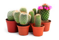 Img 3916 stCollection of cactuses in a pot