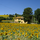 Summer landscape near Corinaldo (Marches, Italy) - PhotoDune Item for Sale