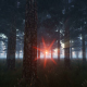 Pine Forest at Sunset - VideoHive Item for Sale