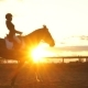 Silhouette of a Girl Riding a Horse at Sunset - VideoHive Item for Sale