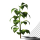 Growing Plants - VideoHive Item for Sale