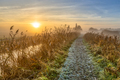 Walking track through reed - PhotoDune Item for Sale