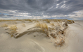 Formation of Young Dune - PhotoDune Item for Sale